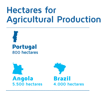 Hectares for Agricultural Production