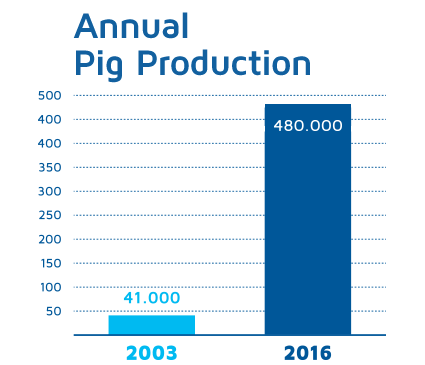 Annual Pig Production